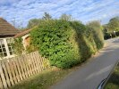 Hedge outside 43 high street need cutting back a good foot as rubs cars and overhangs