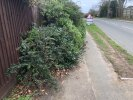 Pavement obstruction from vegetation